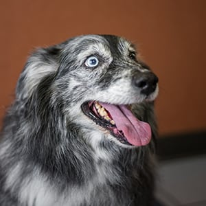 Veterinary Reviews in Longview: Happy dog